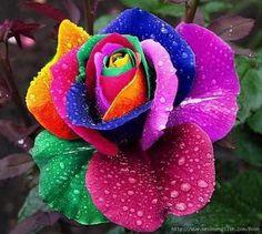 Cool Flower
