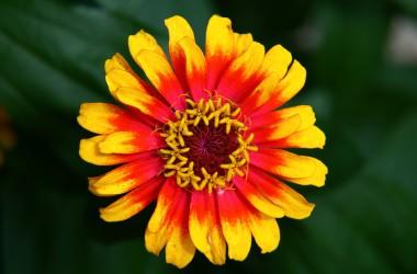 Hippie Flower