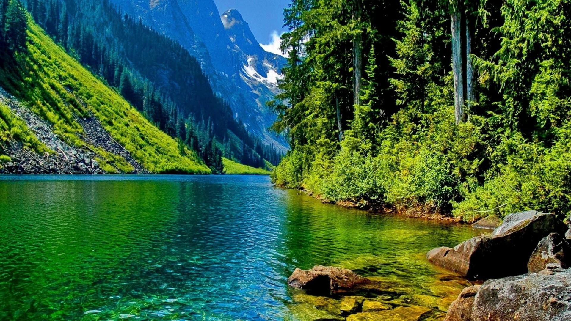Cool nature photo