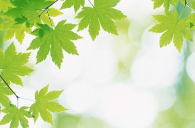 Green Leaf Fresh Wallpaper 1667