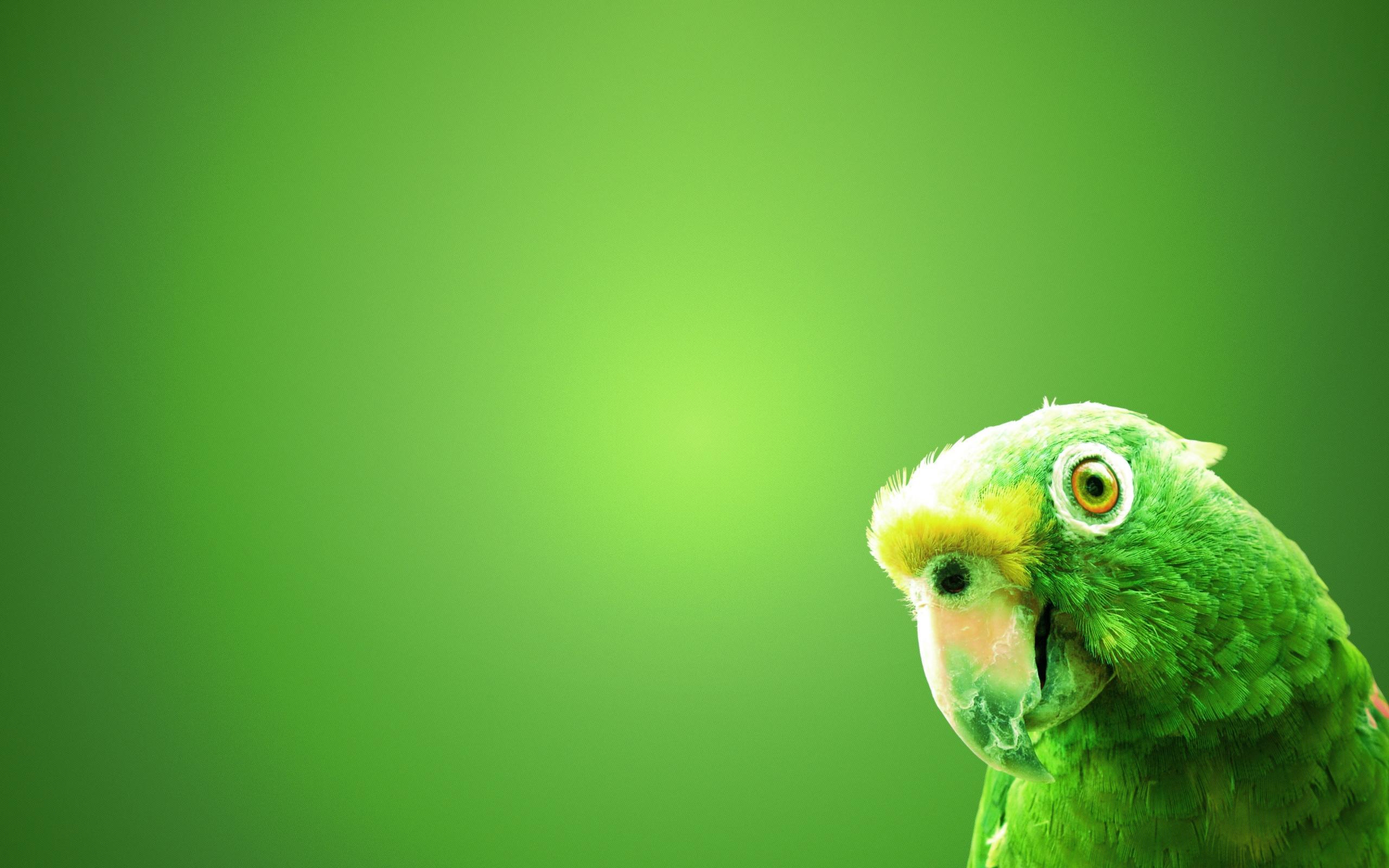 Parrot Free Wallpaper