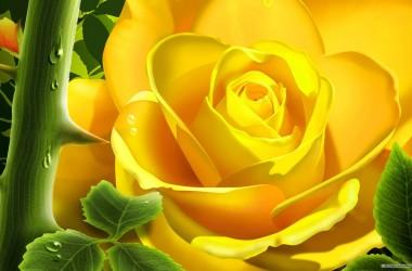 Yellow Rose Free Wallpaper