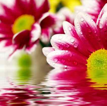 Cool HD Flower