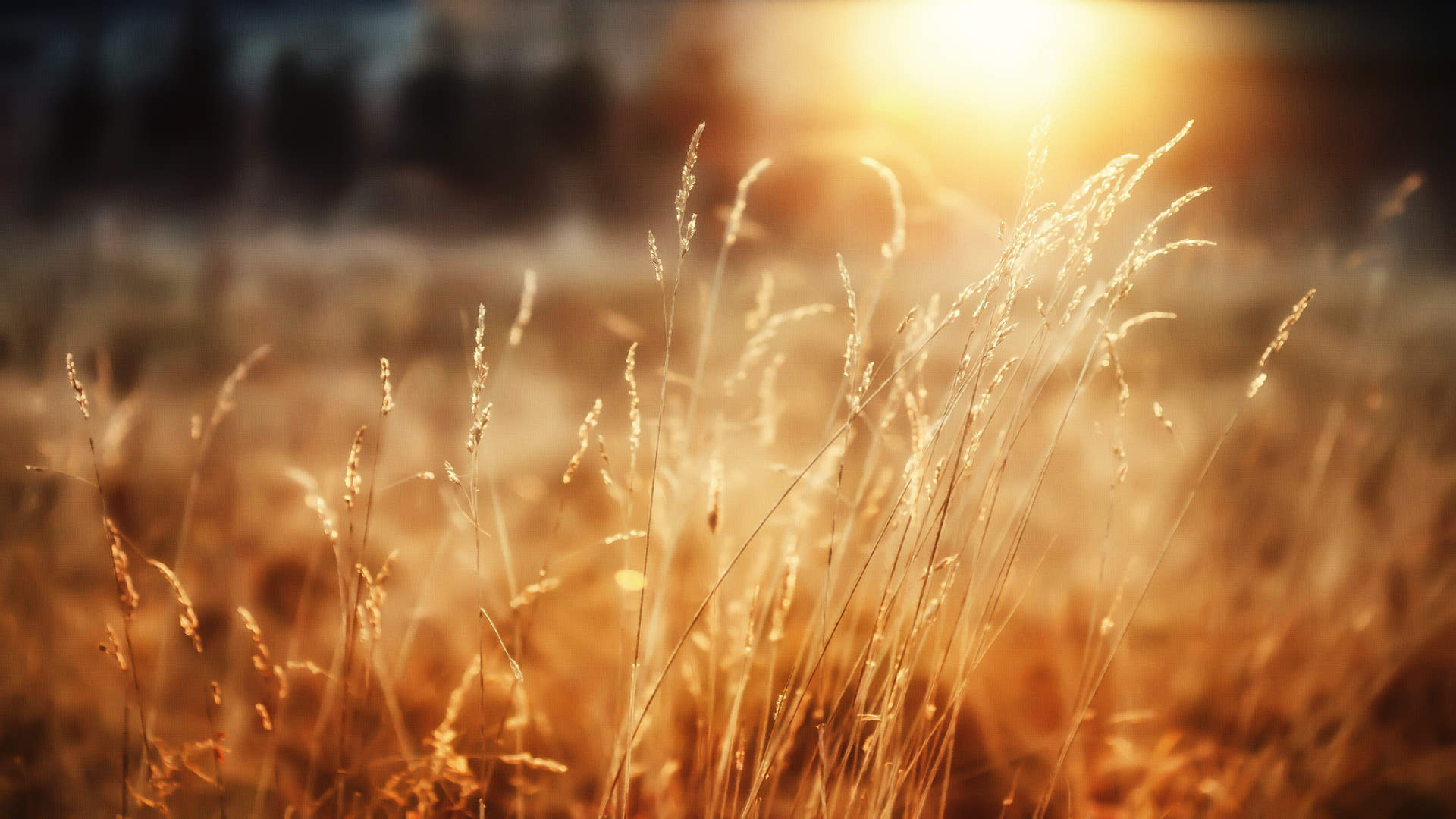Natural Sunshine Wallpaper