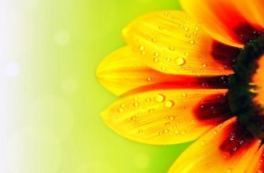 Nice HD Flower