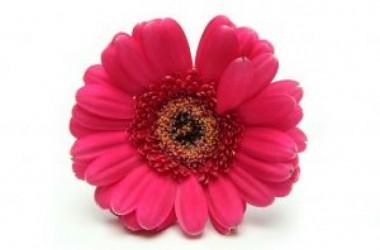Single Pink Flower