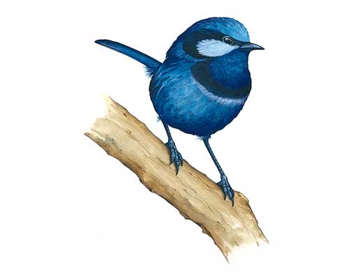 Clipart Bird Image