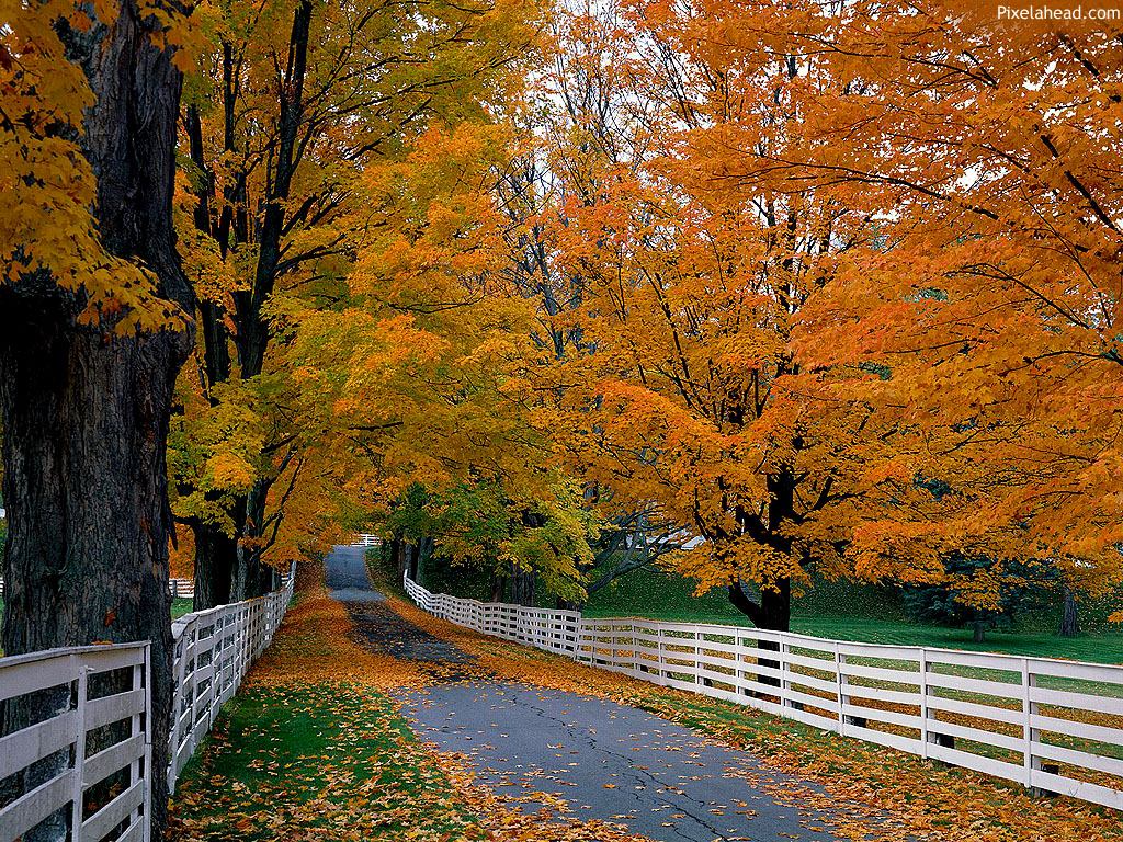 Cool Autumn Season Wallpaper