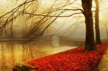 Fall Leaves Autumn Image 3943