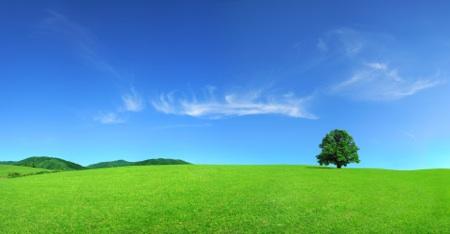 Free Green Field