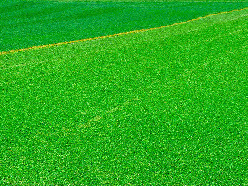 Full Green Field
