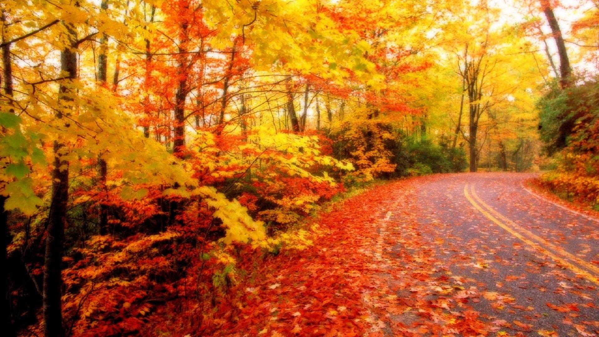 Hd Autumn Season Wallpaper