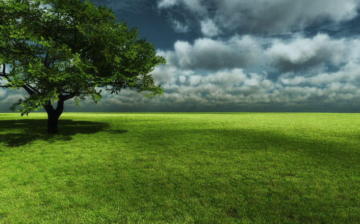 Natural Green Field