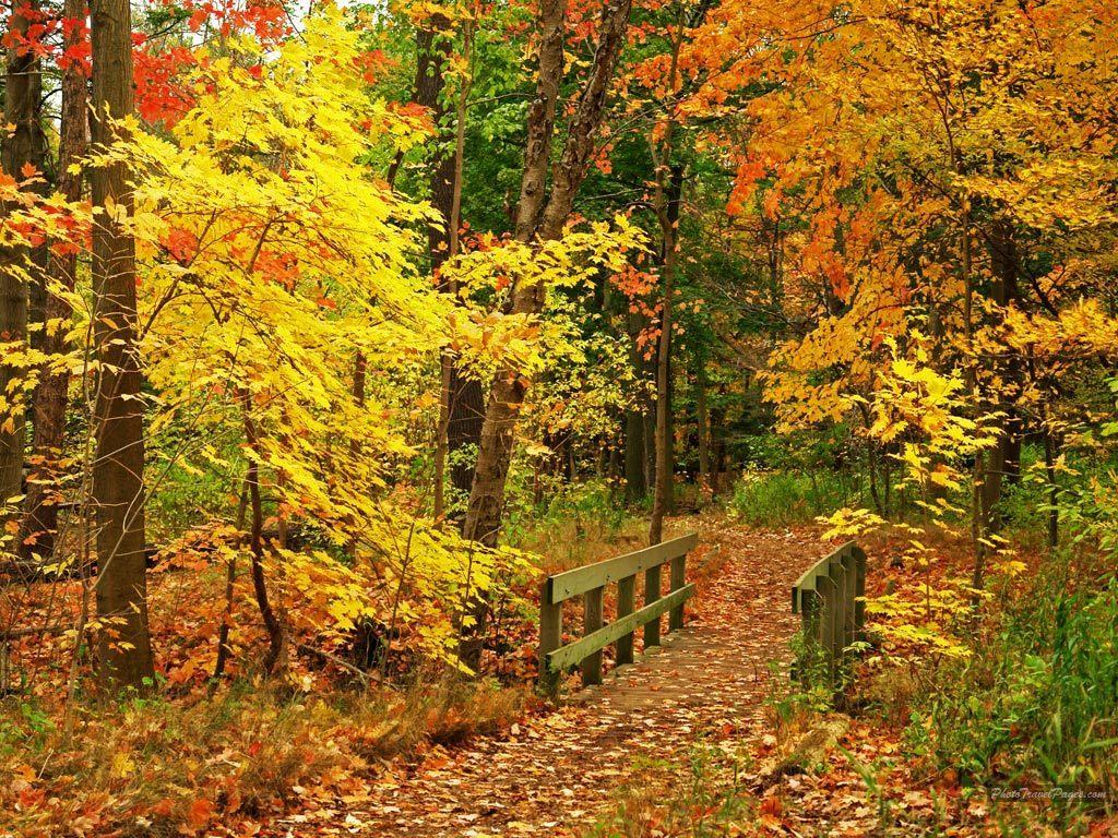 Nice Autumn Season Wallpaper