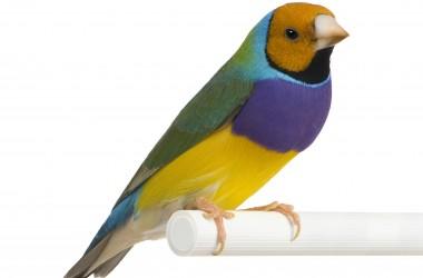 Nice Bird Image