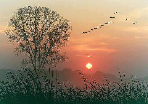 Stunning Dawn Image