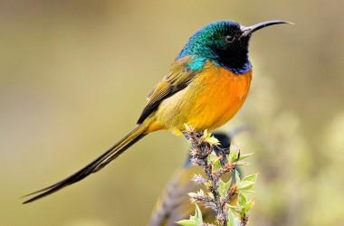 Top Bird Image