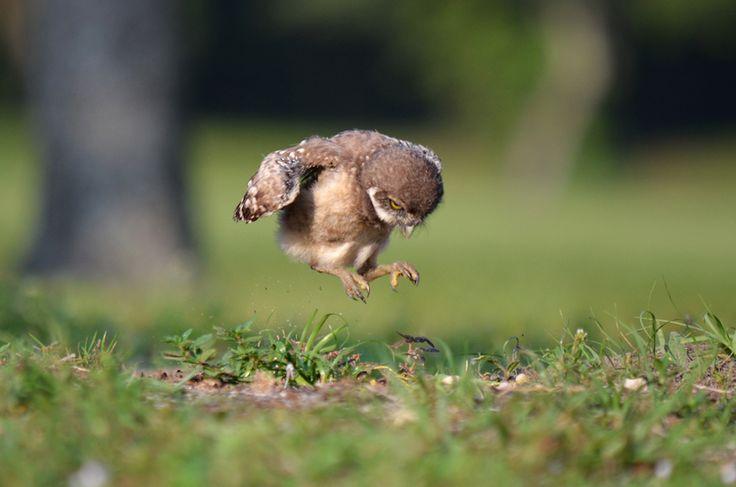 Flying Baby Bird