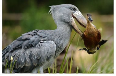 Free Funny Bird