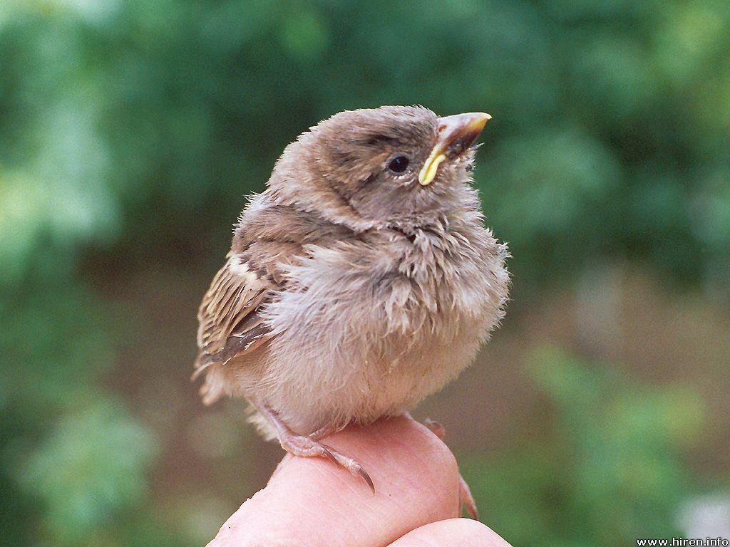 Nice Baby Bird