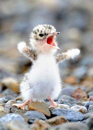 Top Baby Bird