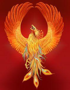 wallpaper of phoenix bird 5565 hdwpro