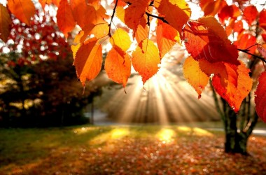 Widescreen Autumn Leaves Wallpaper 4764