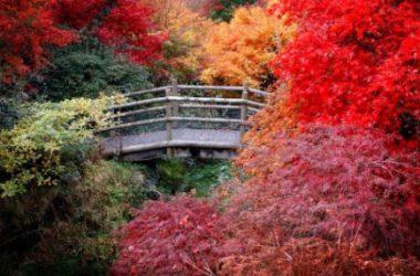 Beautiful Colourful Autumn 6141