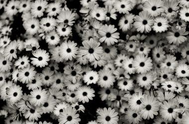 Black White Background