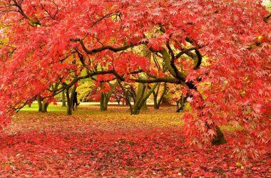 Natural Colourful Autumn 6149