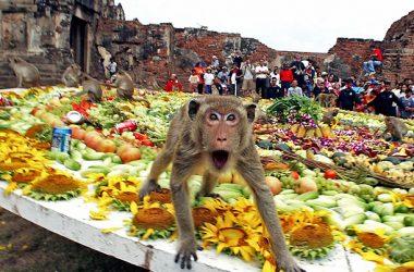 Free Monkey Buffet Festival 7280