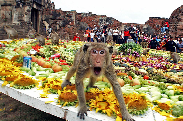 Free Monkey Buffet Festival