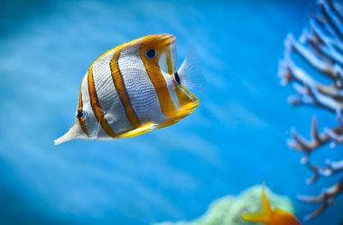 Beautiful HD Fish Wallpaper 8064