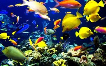 Cool HD Fish Wallpaper 8069