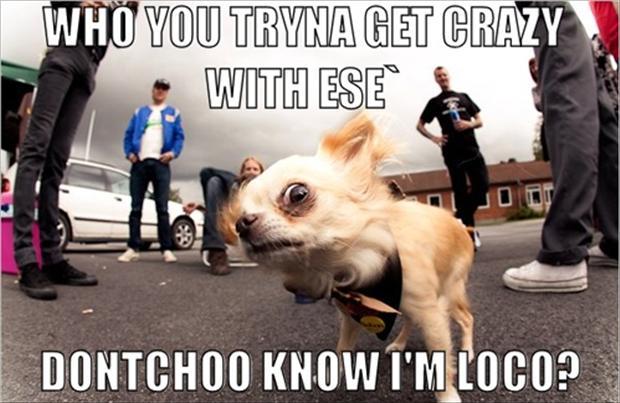 Dog Crazy Funny Pics