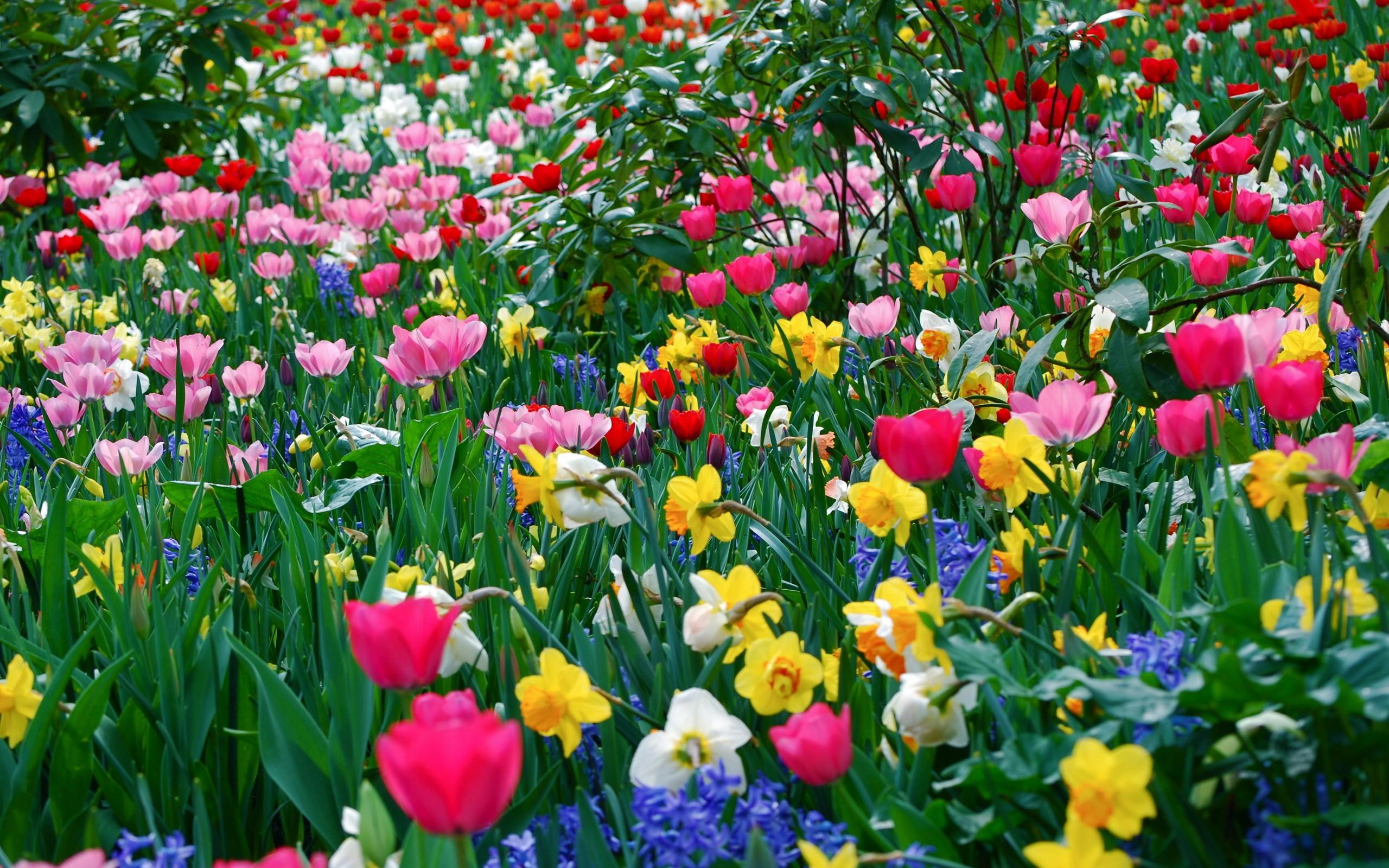 Nice Spring Season Photo