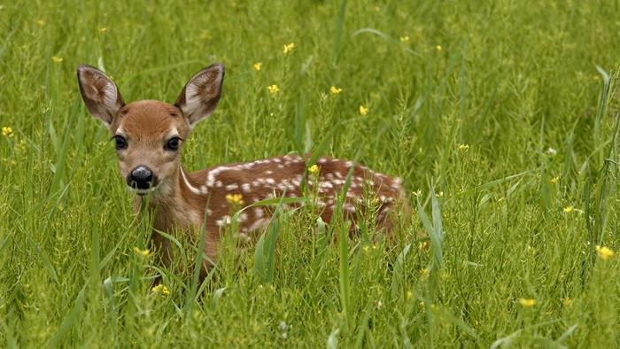 Baby Deer Eat