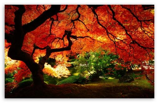 Beautiful HD Autumn