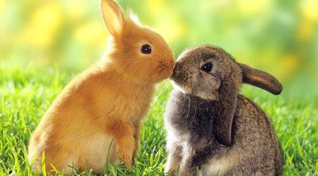 Bunny Picture 9424 HDWPro