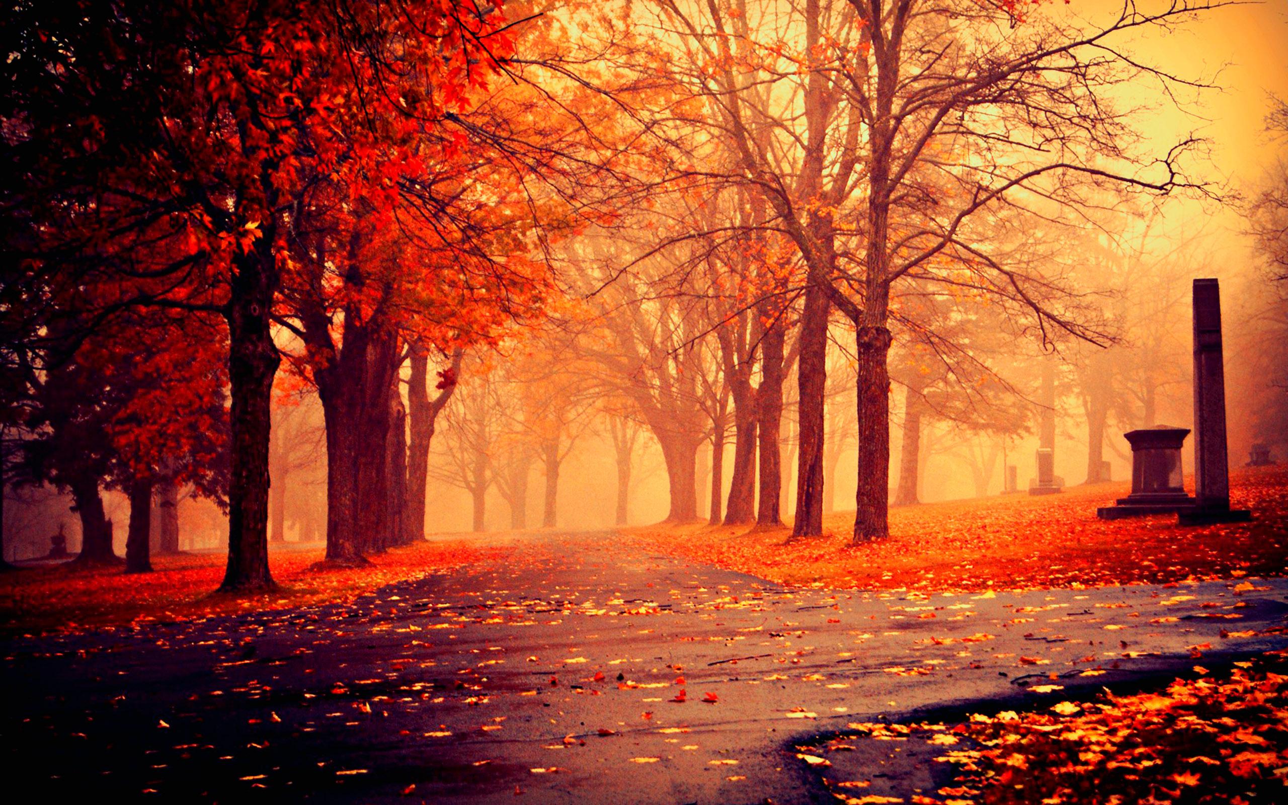HD Autumn Image, Fall HD Autumn, #9775