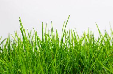 Free Grass Photo