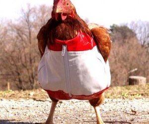 HD Funny Hen