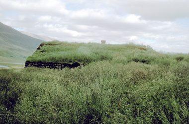 Iceland Grass Photo 9708