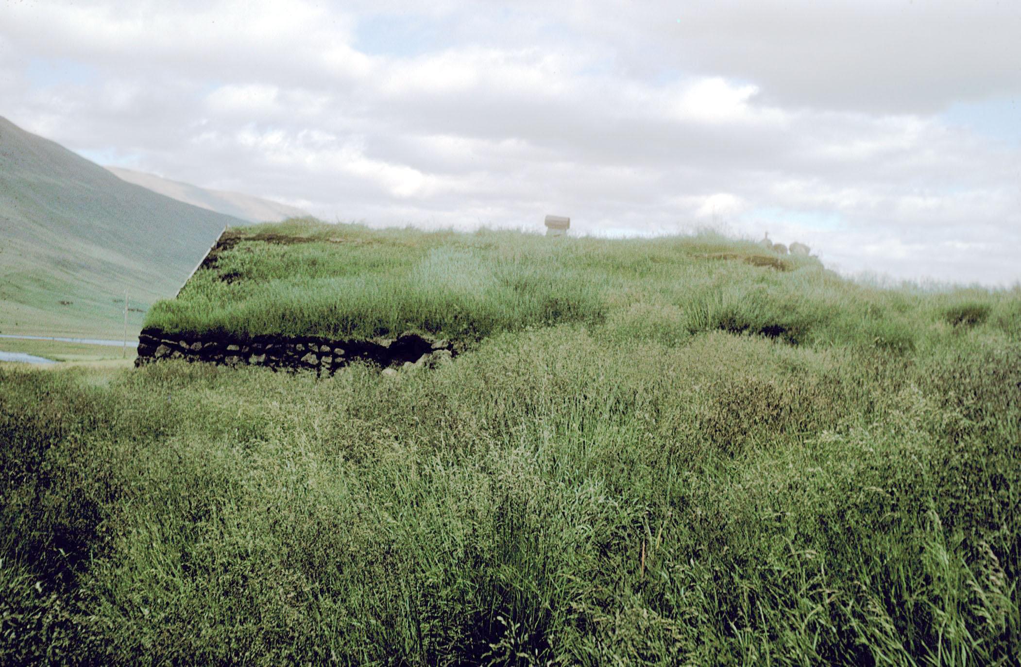Iceland Grass Photo