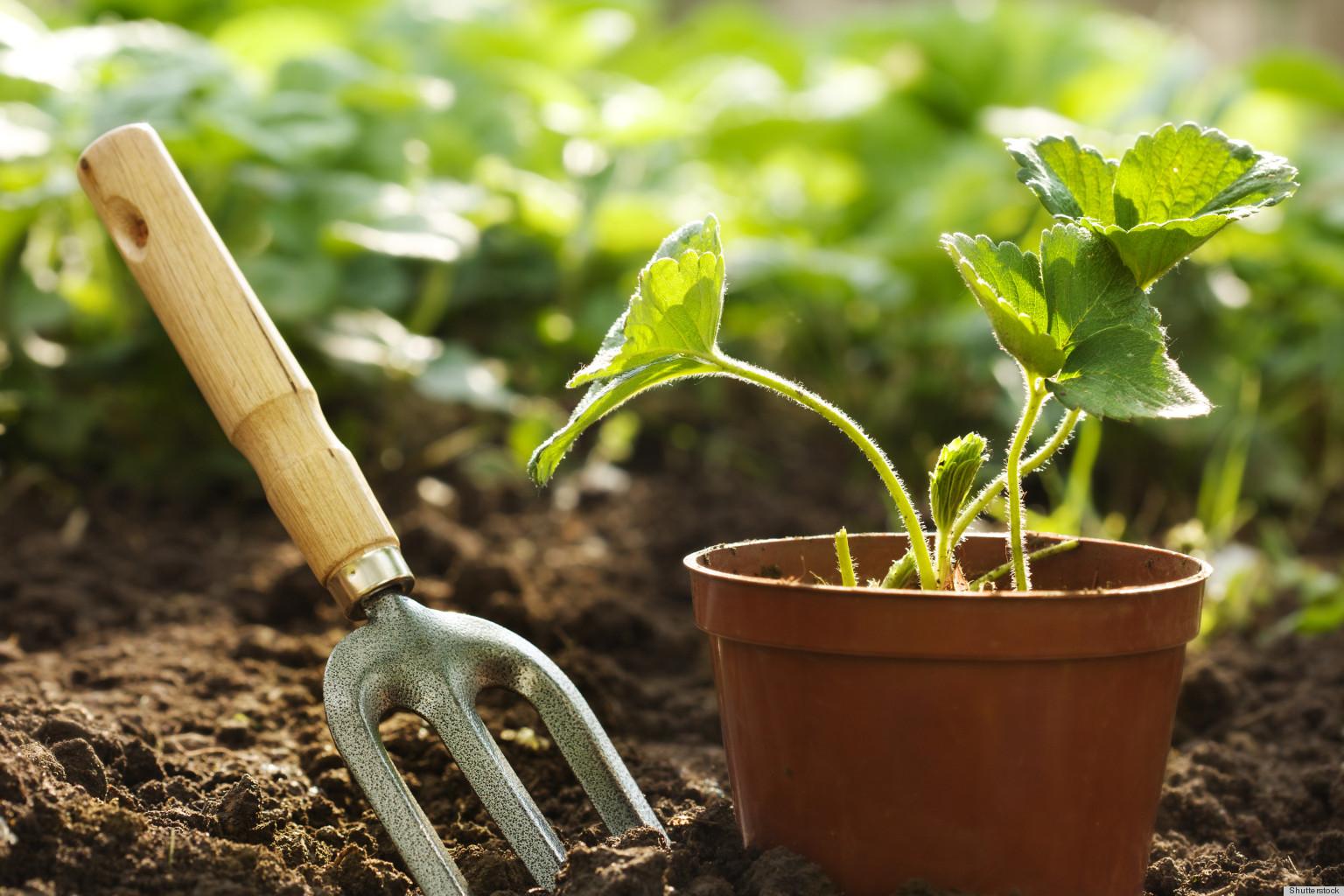 Mid Season Gardening