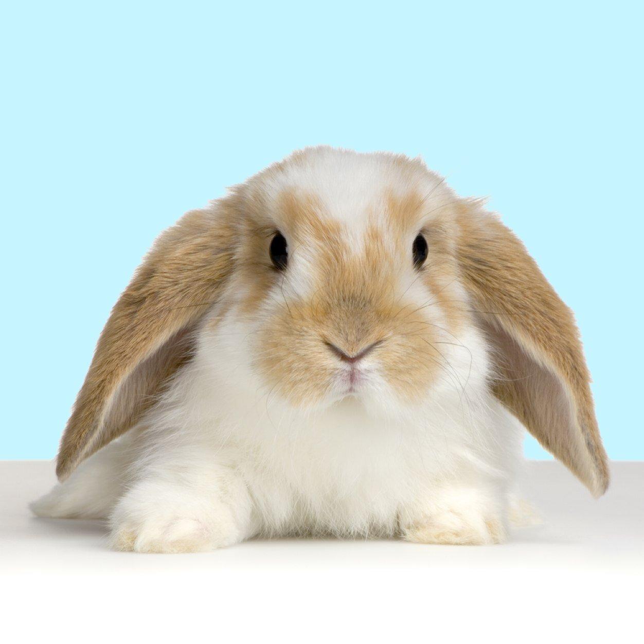 Nice Bunny Photo
