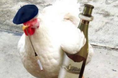 White Funny Hen