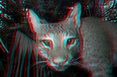 Cat 3D Image