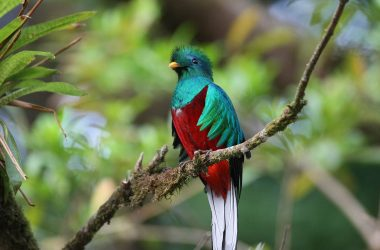 Best Quetzal 10059
