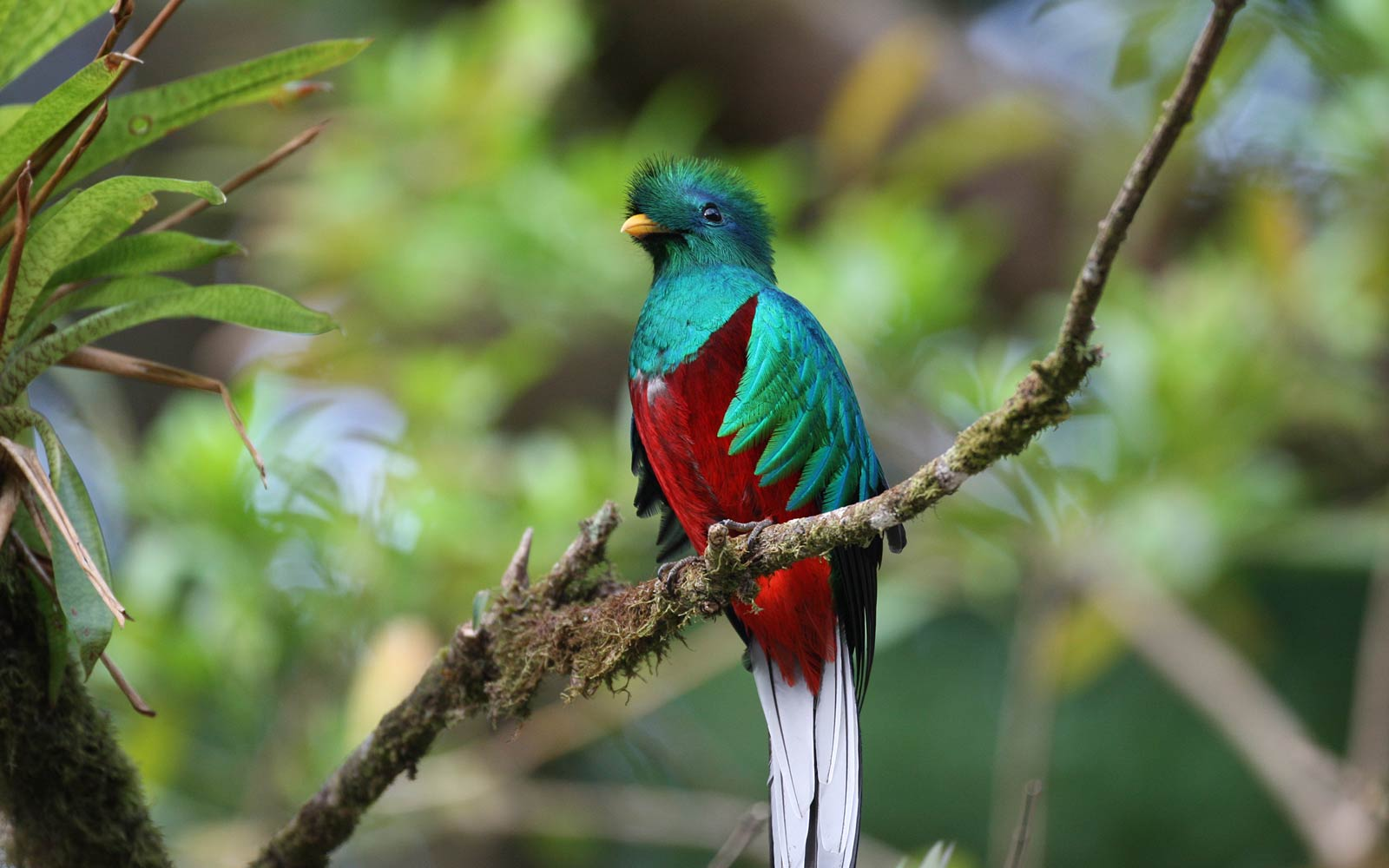 Best Quetzal